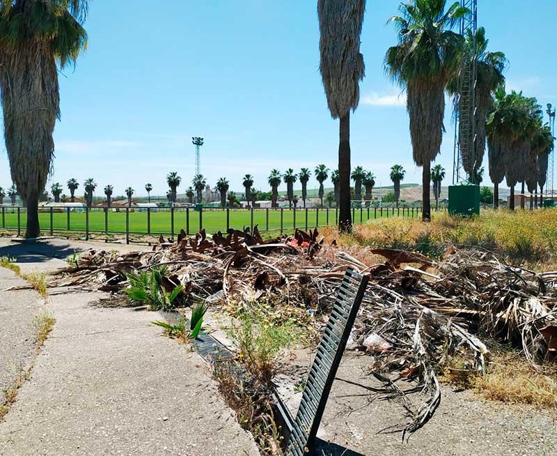 La imagen de la alcantarilla y los restos de las palmeras taladas lo dicen todo del estado de abandono de la Ciudad Deportiva