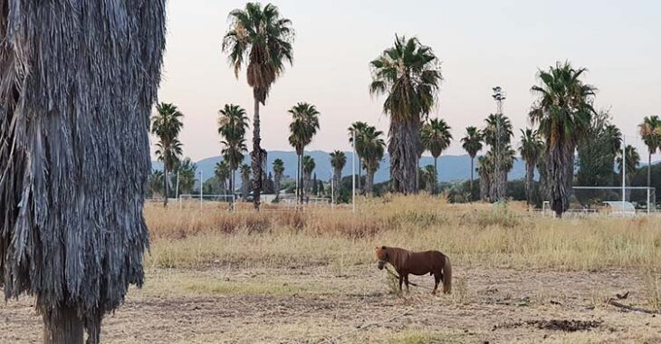 El pony de la Ciudad Deportiva.